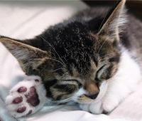 симптомы и лечение лишая у кошек