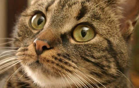 Ограничите возможность общения вашего питомца с другими животными