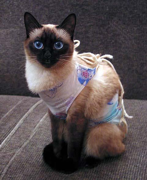 Желательный возраст для стерилизации кошки - от 6 до 12 месяцев