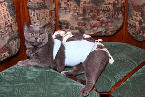 Кастрированная кошка будет нуждаться в коррекции привычного рациона