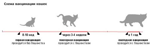 Схема вакцинации кошек