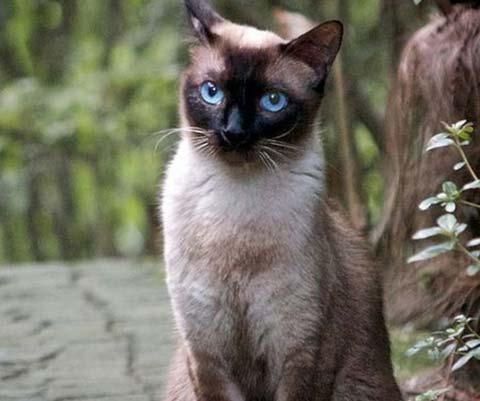 Почему кошка кусается когда ее гладишь  Воспитание