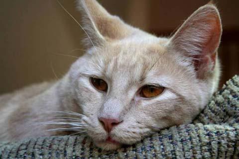 уход за кошкой больной чумкой