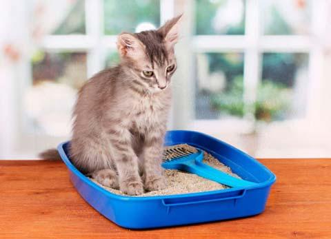 запор у кота в лотке