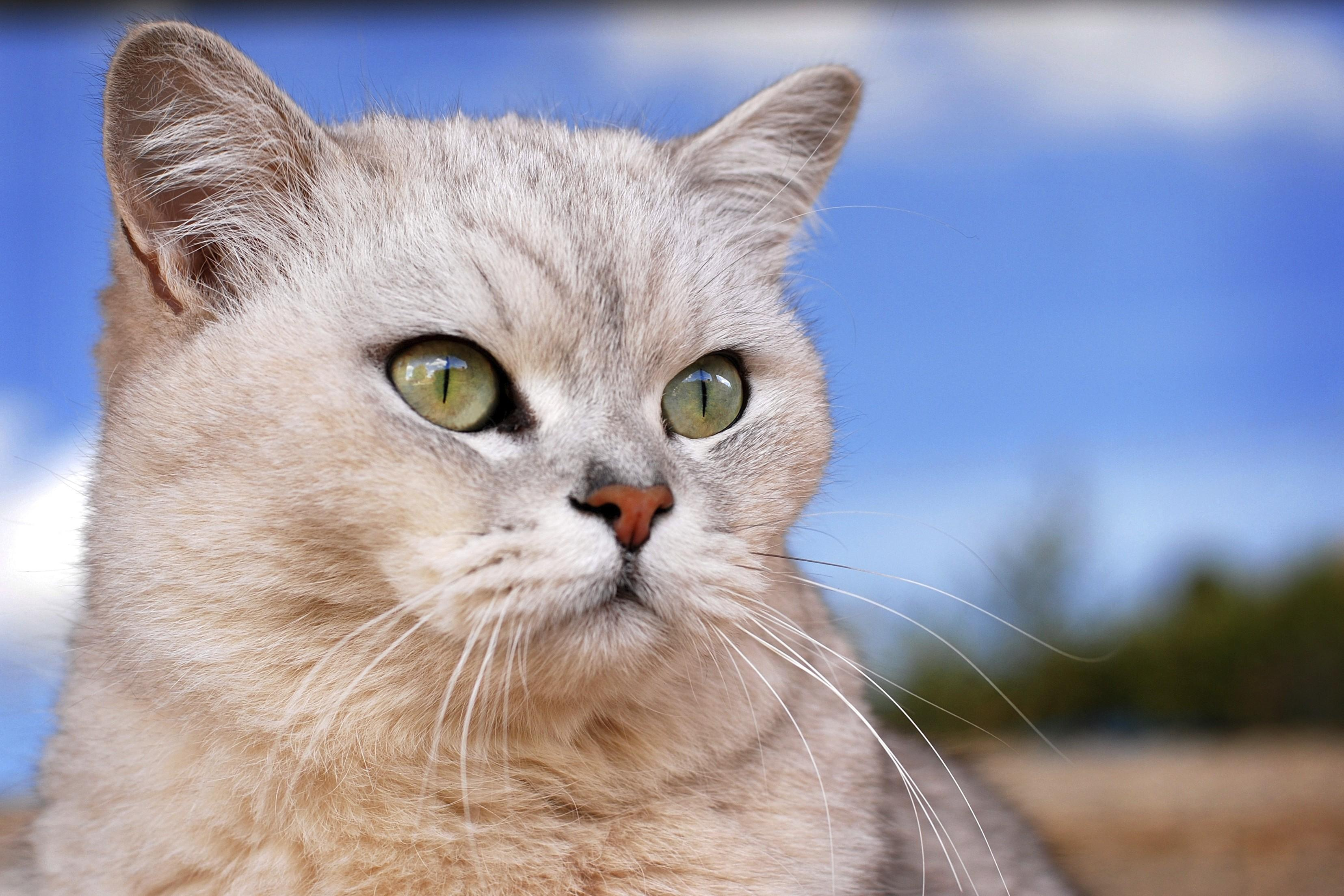 Купили кота без документов