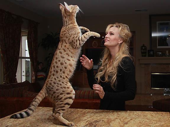 кошка ашера играет