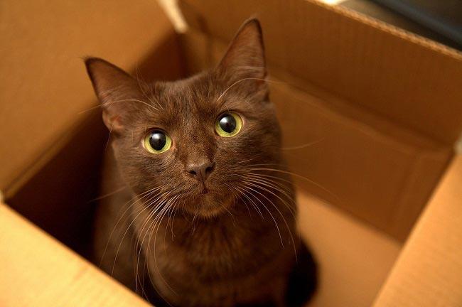 Редкая порода кошек