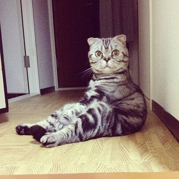 Смешные позы котов