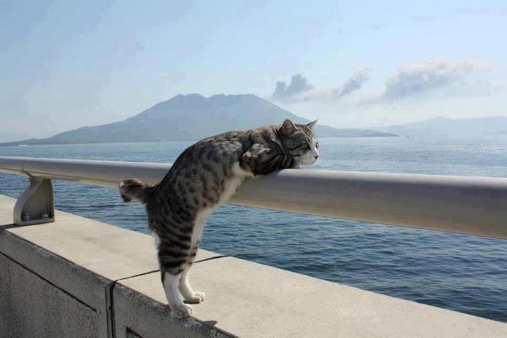 Эгейские кошки очень игривы
