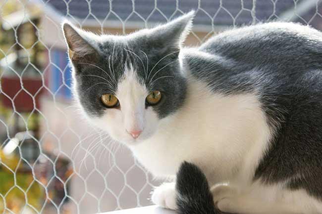 Стоимость эгейского котенка