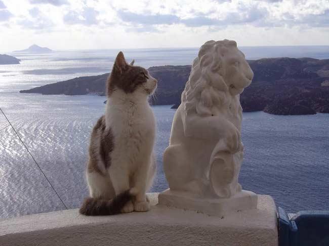 Продолжительность жизни эгейской кошки
