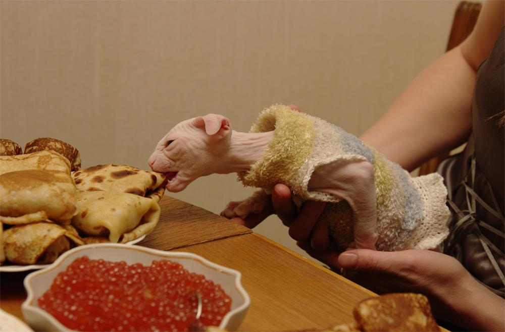 питание украинского левкоя